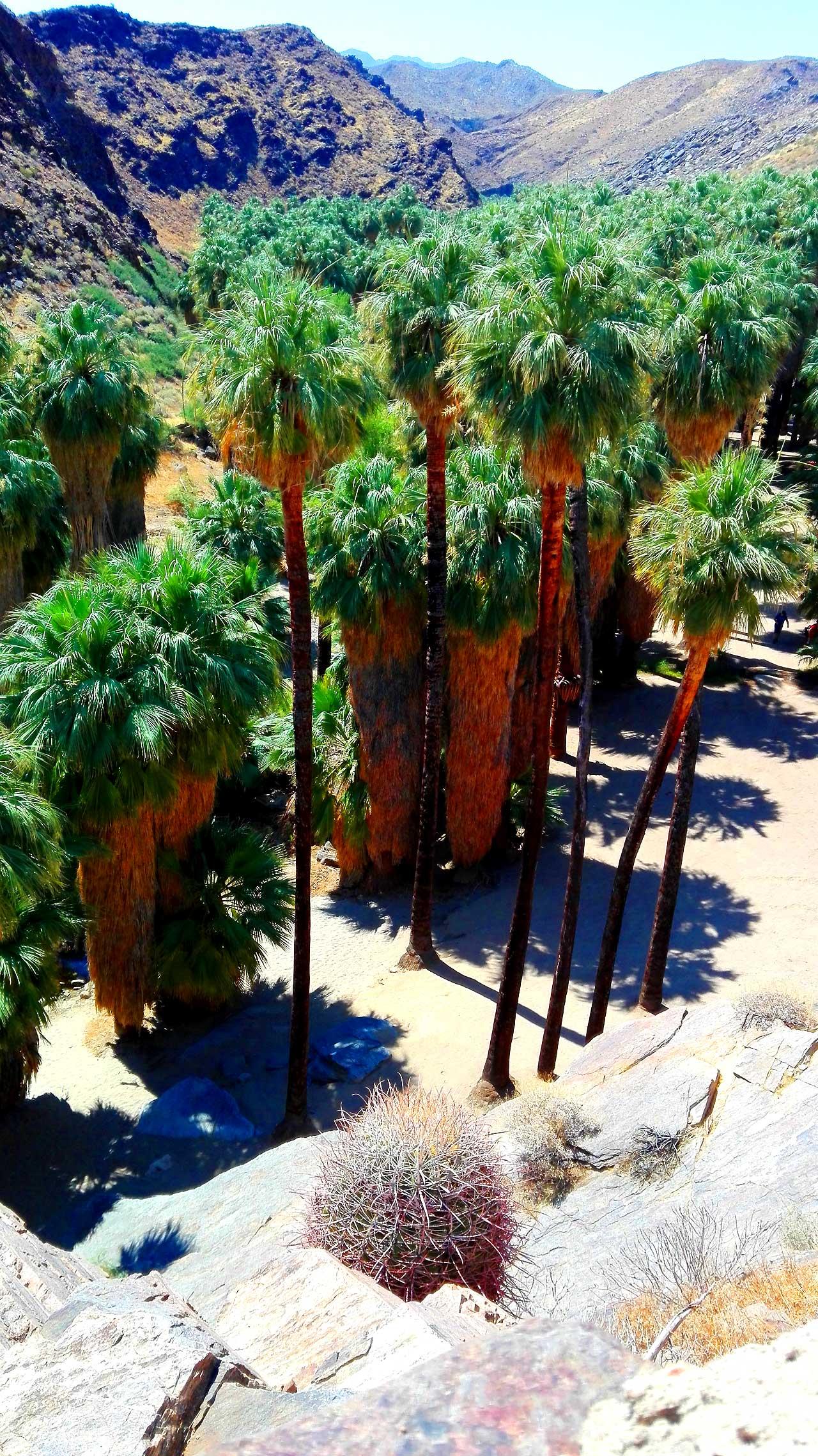 palmentäler