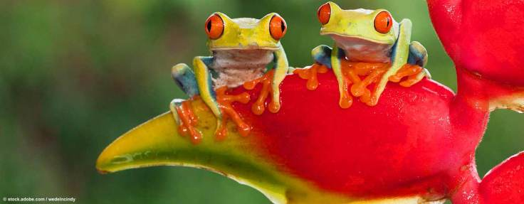 gayreise_costa_rica_frogs