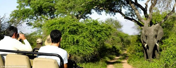 gays_safari_suedafrika