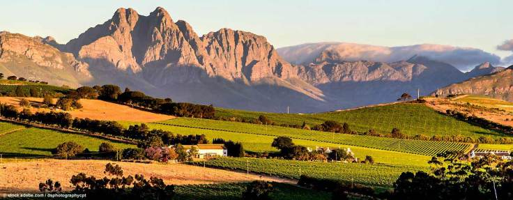 winelands2(1)